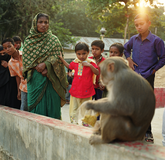 Researcher of HIV-like outbreak says Asian rhesus macaques to continue to thrive in human-altered habitats