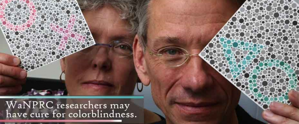 Colorblindness cure from WaNPRC Researchers