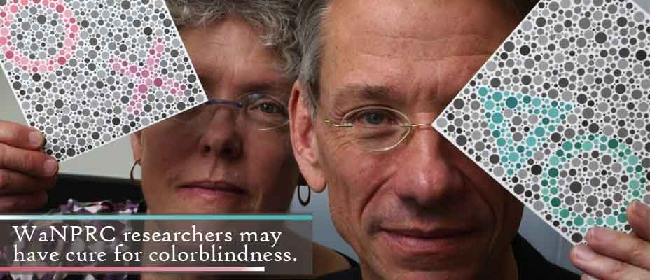 University of Washington reseachers team with biotech firm to cure colorblindness.