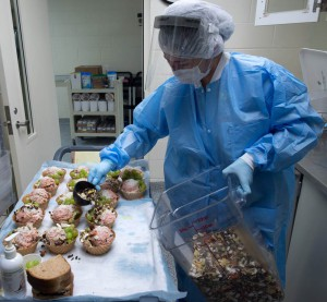 food enrichment preparation at the Washington National Primate Research Center.