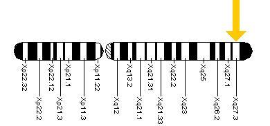 fmr1-gene